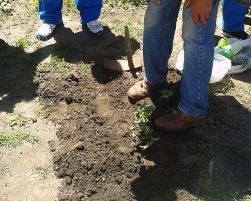 Los alumnos y los Mayores plantaron un árbol de roble